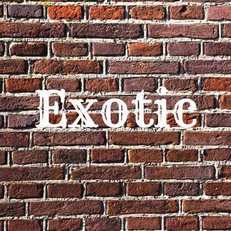 the word exotic on a brick background
